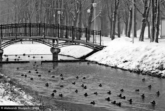Городской парк - до Нового года 3 дня (фото)