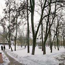 Тополя в сквере Иконникова заявлены под снос. Такая же участь ждет многие другие деревья