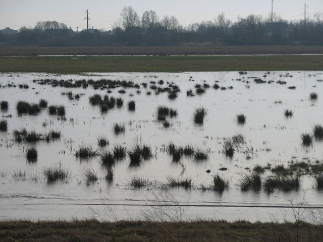 Варшавка - прибывающих в Беларусь встречает почти болото (фотообзор)