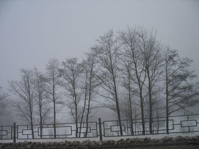 Утро 30 декабря - туман на Мухавце (фото)