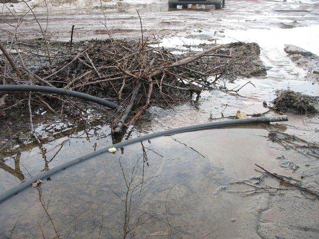 Паводок: Новые Задворцы - 3 (фото)