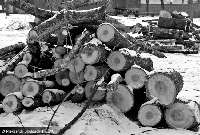 Сквер Иконникова - вырубка идет полным ходом (фото)