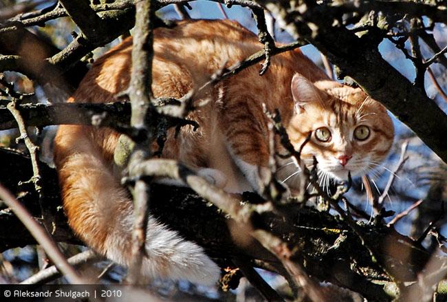 Мартовский кот (фотосессия)