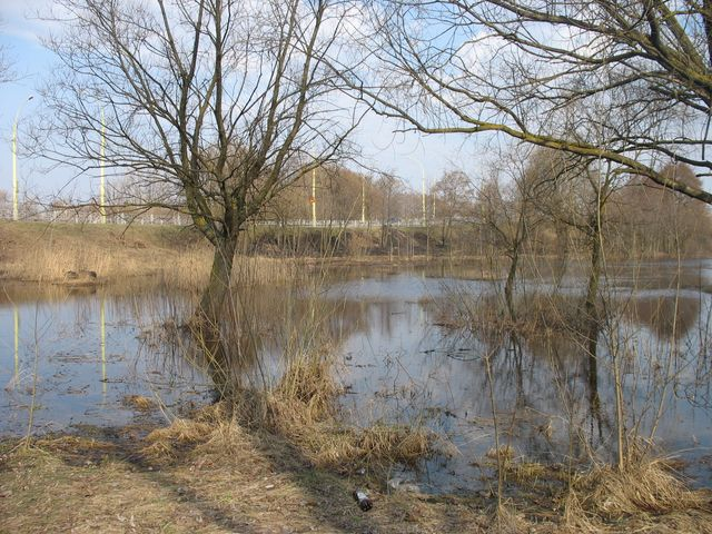 Разлив Мухавца - Варшавка (фото)