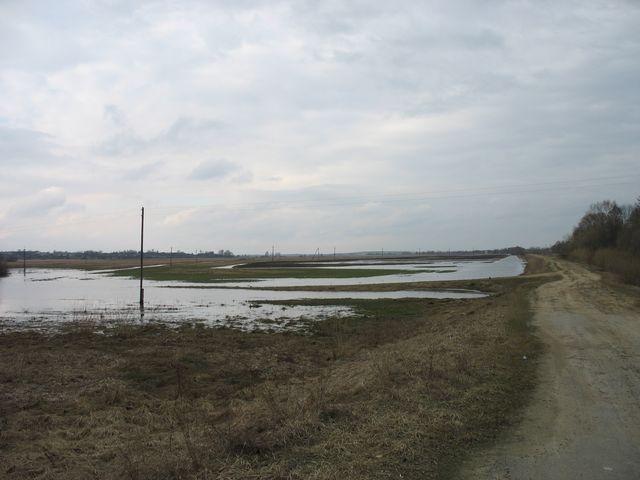 Река Лесная - полна до краев... (фото разлива)