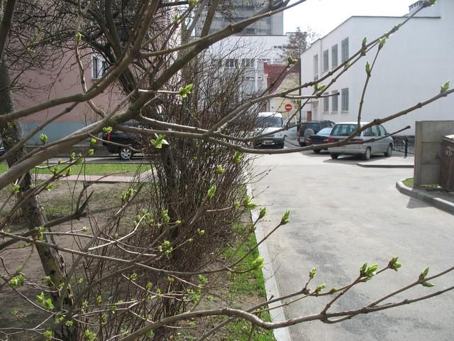 Как они это делают? Фото-отчет работы машины по перемещению живых деревьев в сквере Иконникова