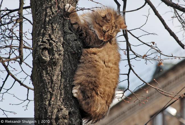 Кот, просто апрельский Брестский кот (фото)