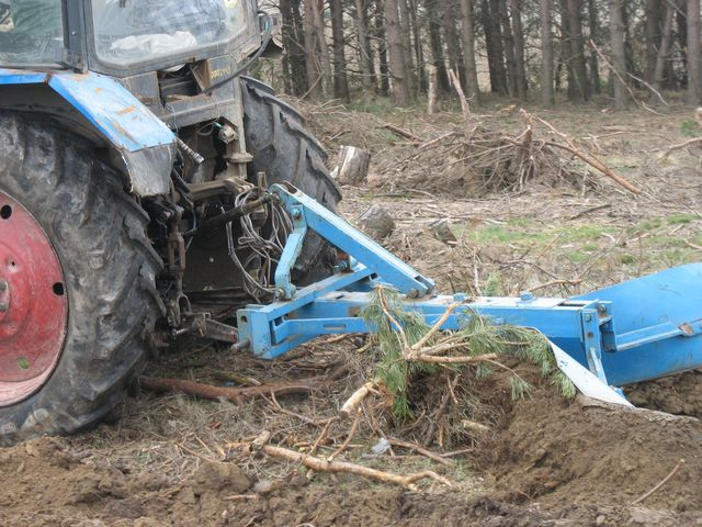 Как мы посадили 10000 деревьев