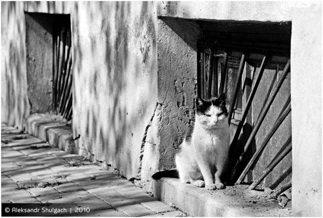 Брестские коты, очередная серия