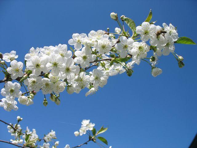 Весенний фото-позитив