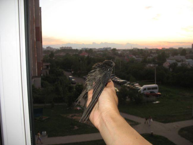 Приключения птенца в отдельно взятой Брестской квартире