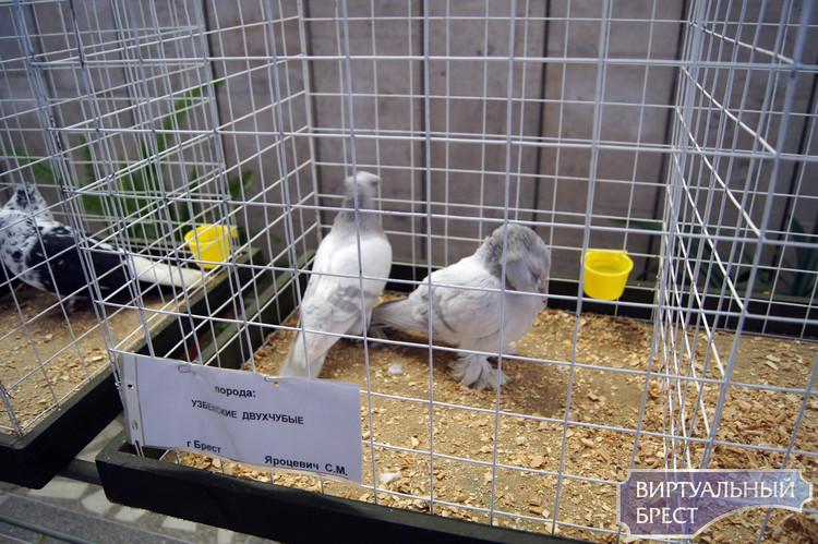 Птички... Репортаж с III областной выставки голубей и декоративных птиц (фото)