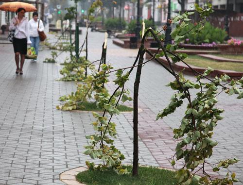 На ул. Советской в Бресте вандалы сломали молодые деревца  (обновлено)