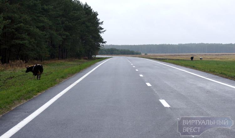Песчатка-Дымники - дорога вокруг Беловежской пущи (часть вторая)