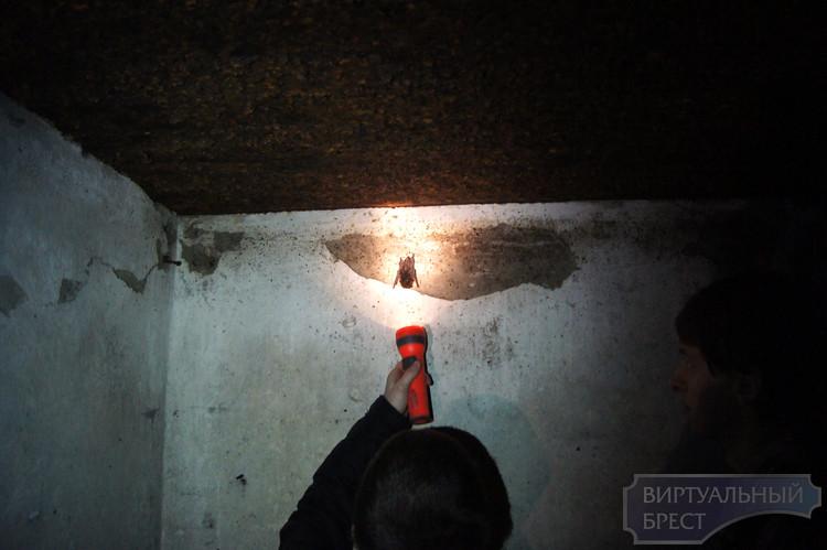 Большие колонии перелетных летучих мышей скопились в Бресте