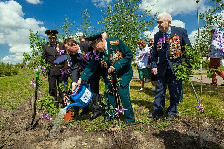 8 мая у стен Брестской крепости открыта аллея «Сирень Победы»