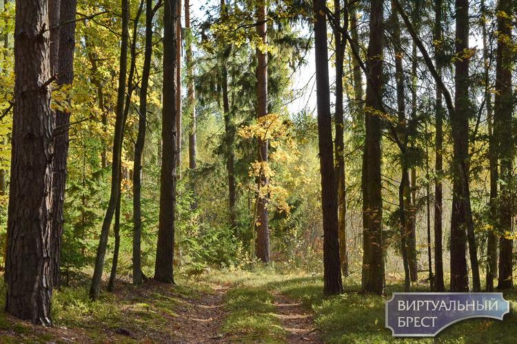 Житель Ивацевичского района заблудился в лесу и вышел на сигнал автомобиля МЧС