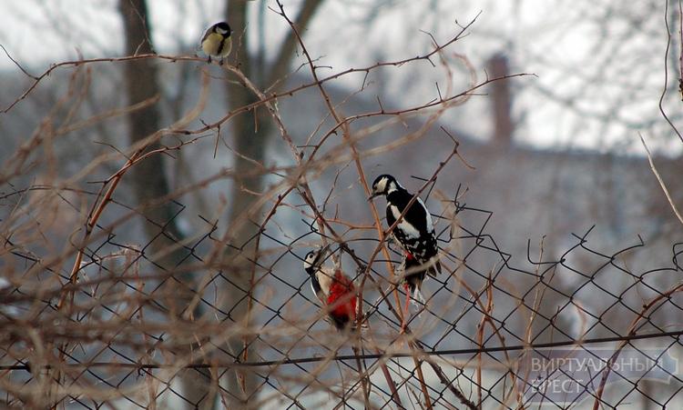 Как брестчане выручали птиц зимой