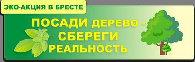Виртуальное сообщество Бреста высадило лес за д. Лыщицы